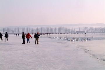 Seegfrörne am westlichen Bodensee