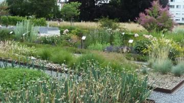 Bibelgarten in Gossau