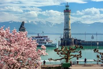 Magnolienpracht am Lindauer Hafen