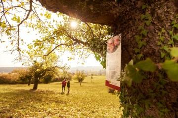 Der Apfellehrpfad in Möggingen