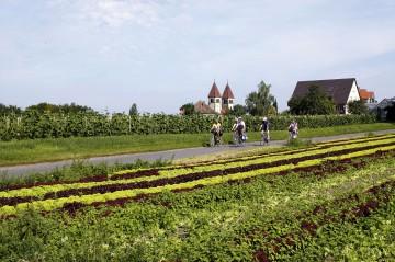 Radfahren auf der Reichenau